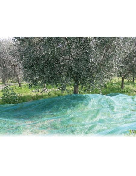 Telo Rete Raccolta Olive 8x10 mt Antispina Angoli Rinforzati con Occhielli | Dpsbrico.it - 26390